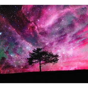 Дерево под небом