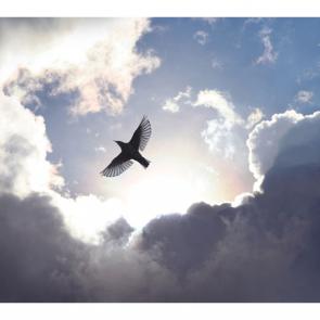 Небо 14803