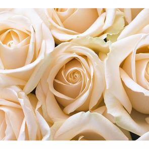 Нежные розы 3