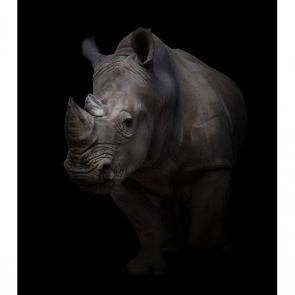 Носорог 5717