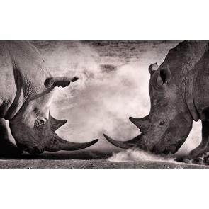 Носорог 5718