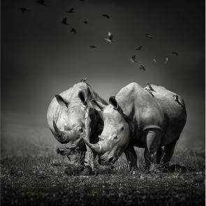 Носорог 5720