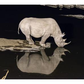 Носорог 5724