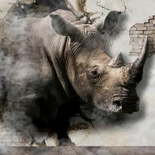 Носорог в стене