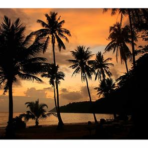 Очертания пальм