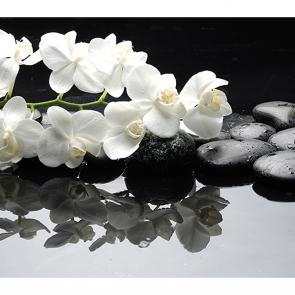 Орхидеи на камнях 2