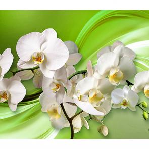 Орхидея  на зеленом