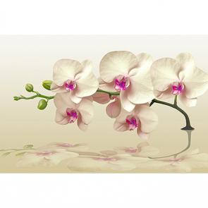 Орхидея бежевая