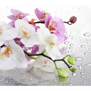 Орхидея и капли 2