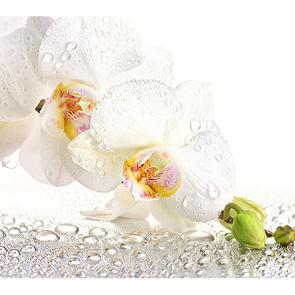 Орхидея и капли