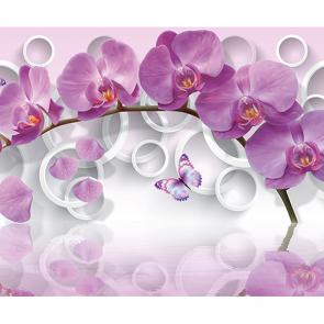 Орхидея и круги