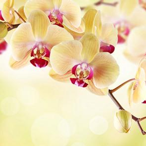 Орхидея на желтом
