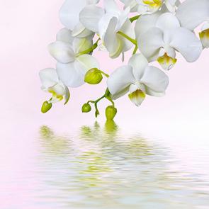 Орхидея над водой 2