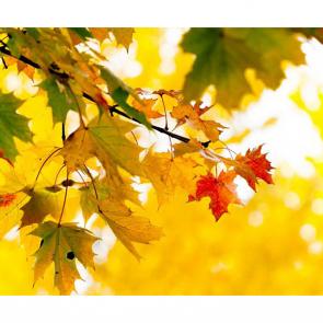 Осень 00926