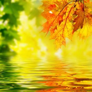 Осень 00928
