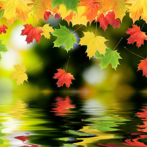 Осень 00929