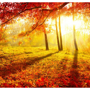 Осень 00966