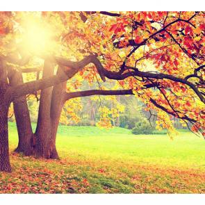 Осень 00969