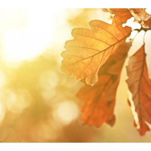 Осень 00970