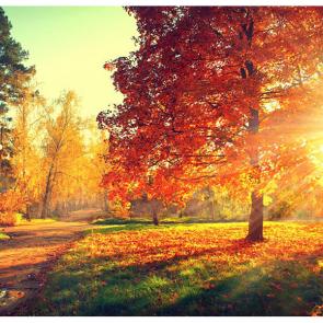 Осень 07506
