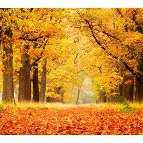 Осень 11194