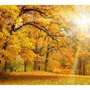 Осень 11333