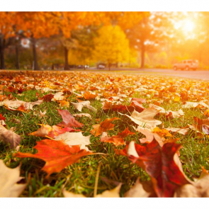 Осень 11361