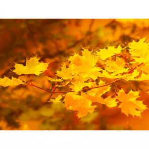 Осень 13839