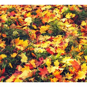 Осень 14826