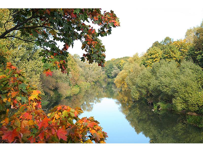 Осень над рекой 1401