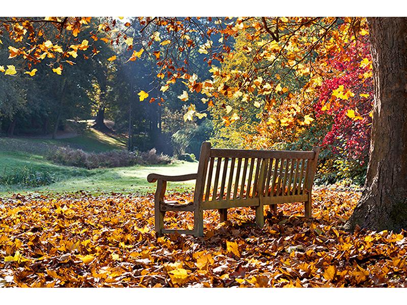 Осень в парке 1403