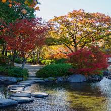 Осень в Токио