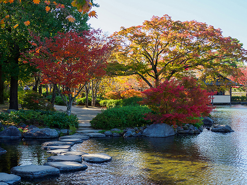 Осень в Токио 1402