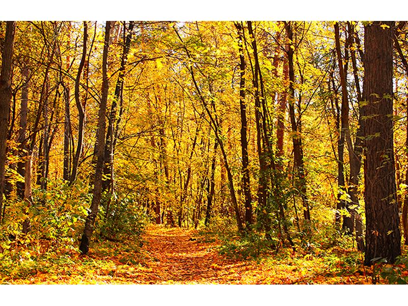 Осенний лес 1398