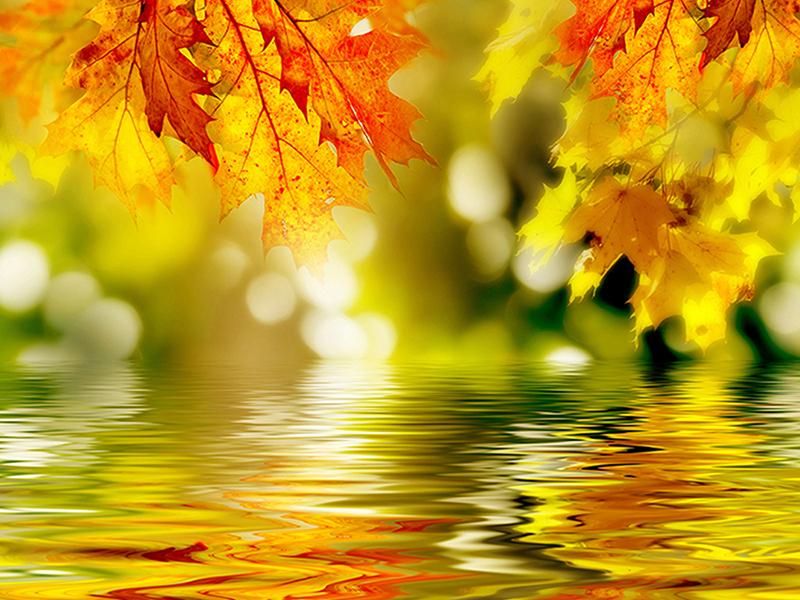 Осенняя пора 1391