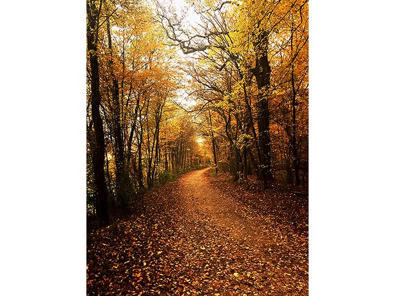 Осенняя тишина 1388