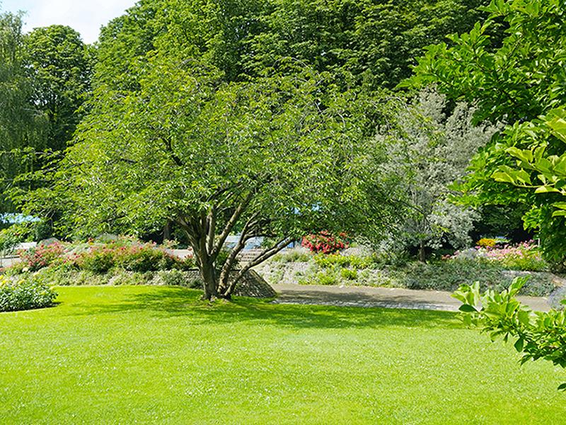 Отдых в парке на лужайке 1380