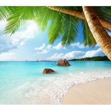 Пальмы и океан