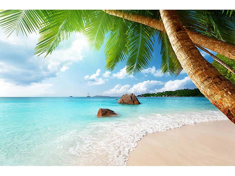 Пальмы и океан 2534