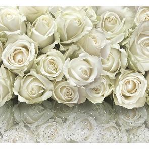 Отражение белых роз