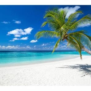 Пальма и белый пляж