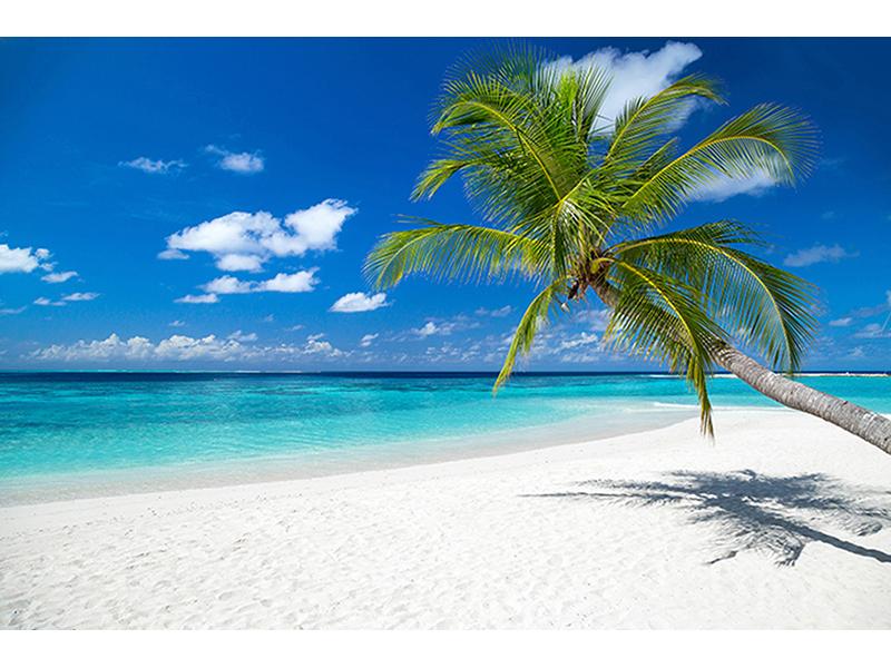 Пальма и белый пляж 2538