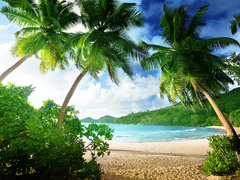Пальмы на пляже 1368