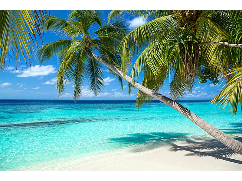Пальмы и море 2540