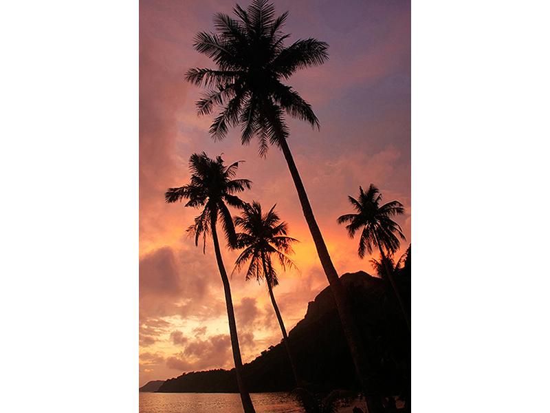 Пальмы на закате 2541