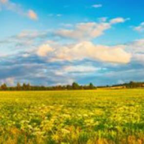Панорама 15410