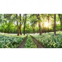 Панорама лесной поляны