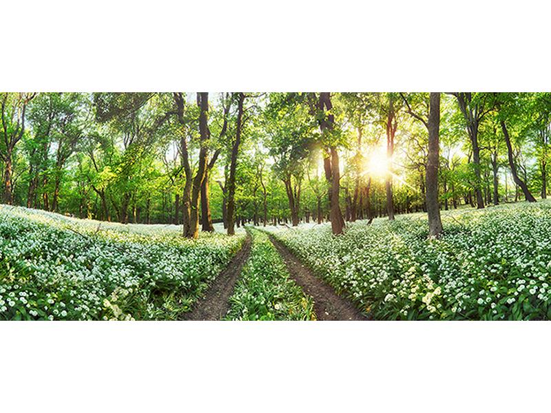 Панорама лесной поляны 1357