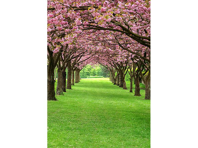 Парк в Дании 1333
