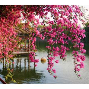 Парк в Китае